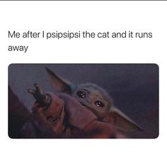 We're Not Surprised: Cats Have Managed to Take Over Baby Yoda Memes Too Yoda Meme, Yoda Funny, Funny Cute, Really Funny, Hilarious, Funny Stuff, Random Stuff, Ver Memes, Funny Memes