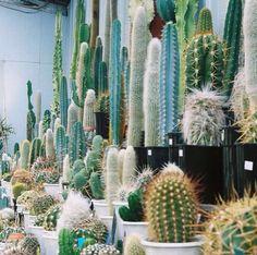 I love cacti