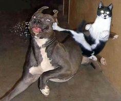 Comme chat et chien