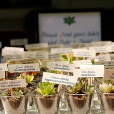 DIY, succulent plant wedding favors: Perfect. Or, maybe even little lavender starts?