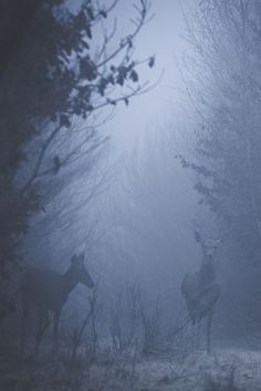In the mist by:Nicolas Le Boulanger