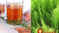 Egy tea amit a 40 év fölöttiek rendszeresen kellene fogyasszanak! Handmade Cosmetics, Korn, Shot Glass, Wine Glass, Evo, Alcoholic Drinks, Health And Beauty, Minion, Tableware