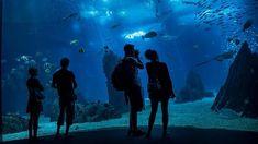 Los 25 mejores acuarios del mundo | Via ABC Viajar | 29.07.2015 - El Oceanário de Lisboa, situado en el Parque de las Naciones, ha sido reconocido como el mejor acuario del mundo en los premios Traveller's Choice 2015, de TripAdvisor. #Portugal