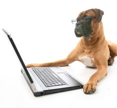 Pet Medical Insurance Reviews Will Save You More Money Than You Ever Anticipated - First Step FinanceFirst Step Finance