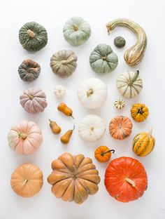 Beautiful heirloom pumpkin varieties