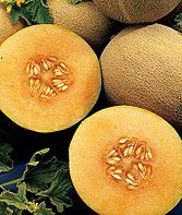 Burpees Ambrosia Hybrid Cantaloupe Seeds and Plants, Fruit and Vegetable Seeds at Burpee.com
