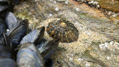 Shell Moth, Insects, Shells, Photography, Animals, Conch Shells, Photograph, Animales, Animaux