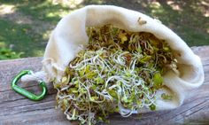Grow sprouts on the trail in your pack