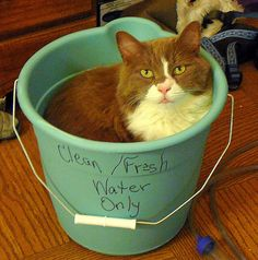 ummmm cat in water bucket cat want bath or cat makes no room for water hmm.......