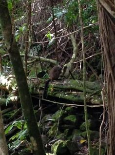 Elusive wallaby spotted near Wilson Tunnel