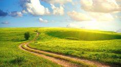 Field Path Beautiful Summer Nature