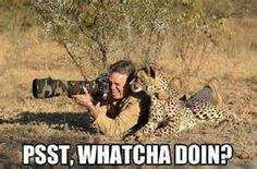 funny quotes about leopards - Yahoo Search Results Yahoo Image Search Results