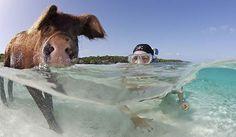 Bahia dos Porcos Bahamas