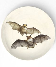 bat plate #kitchen