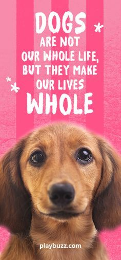 Dogs are not our whole life but they make our lives whole...