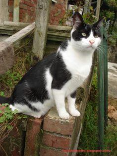 blog di Sara: gatto comunista