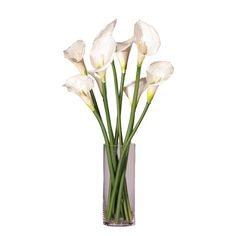 White Callas Lilies in Glass Cylinder