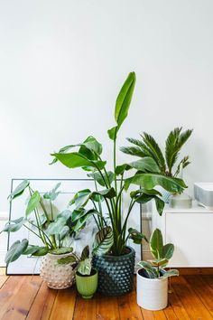 Ornamental plants: 60 photos to bring the green to your home - Home Fashion Trend Romantic Bedroom Decor, Diy Bedroom Decor, Diy Home Decor, House Plants Decor, Plant Decor, Indoor Garden, Indoor Plants, Deco Jungle, Plantas Indoor