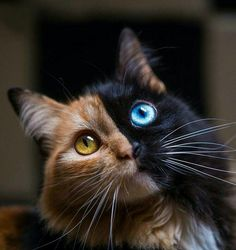 Wow - your daily dose of funny cats - cute kittens - pet memes - pets in clothes - kitty breeds - sweet animal pictures - perfect photos for cat moms Pretty Cats, Beautiful Cats, Animals Beautiful, Pretty Kitty, Unique Animals, Beautiful Pictures, Easy Animals, Wild Animals, Simply Beautiful