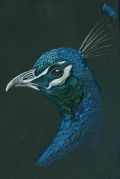 colouring pencil on black paper - Google Search