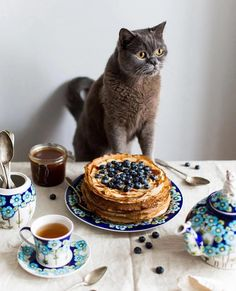 Cat Cookie Jar, Cookie Jars, Cat Cafe, Tea Time, Blueberry, Food Photography, Berries, Sweets, Breakfast