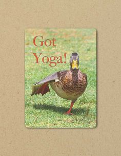 Photo Greeting  Card YOGA DUCK Eco by FarmFreshPhotography on Etsy, $4.25