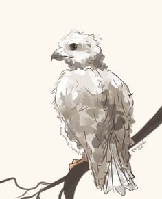 Rowan's baby bird by taratjah on DeviantArt