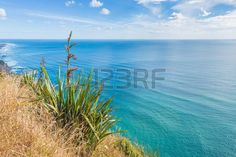 flax plant: New Zealand flax single plant at the bluff above the sea