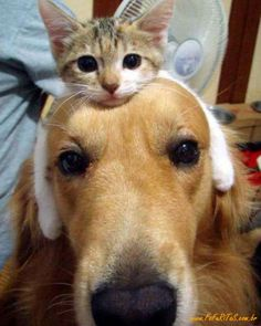 Dog and cat.  So sweet!!!!