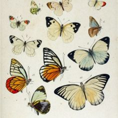 Discover the art of Von Felder and get beautiful printable butterflies for free. (in Spanish)