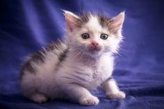 [:en]Cutest Cat Ever![:] - kitten #catlover #cat #kitty #kitten #猫