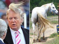 Donald Trump Funny Hair Memes : Simply funny donald trump memes