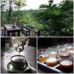 Kopi Luwak coffee tasting past Ubud in Bali