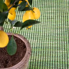 Vandra Rugs       #vandrarugs  #green  #lemon  #inredning  #room  #rug  #carpet  #ragrug  #homedecor  #interiordecor  #interiordesign  #Scandinaviandesign  #homeinspo  #heminredning