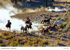 Cavalli e Cowboy