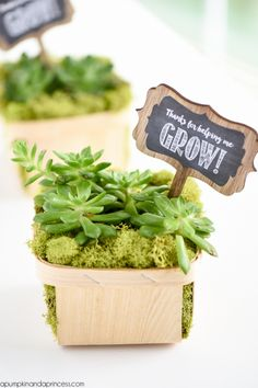 """Berry basket succulent gift - this easy DIY succulent gift makes a great Mother's Day or teacher appreciation gift. FREE printable """"Thanks for helping me grow!"""" tags."""