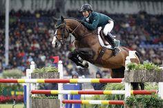 Amaretto D'arco  Showjumping champion stud stallion