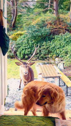 Kangaroo, Norway, Island, Dogs, Animals, Baby Bjorn, Animales, Animaux, Pet Dogs