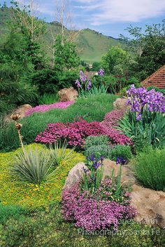 Mary Ellen Keskimaki created s colorful patchwork of thyme, soapwort, iris and other perennials on her hillside front yard garden in Golden, Colorado.