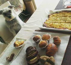 〈低糖質〉  低糖質パン試食会 RYUも参加♪  #低糖質#糖質オフ#低糖質パン#糖質オフパン#RYU#シュナウザー#ドッグ#犬#気流Life