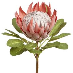 Latest Paper Flowers For Sale South Africa Tropical Flowers, Botanical Flowers, Exotic Flowers, Faux Flowers, Botanical Art, Beautiful Flowers, Protea Art, Protea Flower, Paper Flowers For Sale