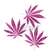 Bright cannabis sativa leaves painted in watercolor. Realistic scientific illustration of plant. Hand drawn marijuana illustration isolated on white background. Design element photo