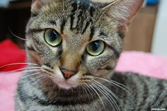 cat       cat  Posted by MowT  on 2010-10-24 14:49:27      Tagged:  , cat  - http://newsyork.gq/cat-21/