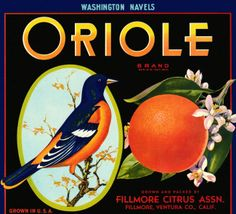 Vintage reproduction advertisement for Oriole brand oranges, Ventura County, California