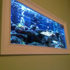have to have a HUGE in the wall fish tank for relaxation time Fish Aquarium Decorations, Wall Aquarium, Aquarium Stand, Home Aquarium, Aquarium Fish Tank, Saltwater Fish Tanks, Saltwater Aquarium, Planted Aquarium, Fish Tank Wall
