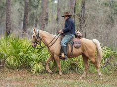 2013 Olustee Battle Re-enactment - lynnw