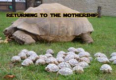 mama and babies :)