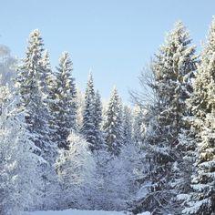 WINTER WONDERLAND FOREST 12x12 SCRAPBOOK PAPER | Scrapping The Magic