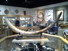 More recently, this month, the Sedona gallery said its goodbyes to an astounding Woolly mammoth tusk. This remarkable and intriguing tusk has now been decorated into its new home in Missouri. A goodbye and a happy trail to a favorite Woolly mammoth tusk.