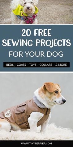 Training your dog is all about building your relationship with your canine as well as establishing boundaries. Be firm but consistent and you'll see awesome results when it comes to your dog training work. Dog Clothes Patterns, Dog Crafts, Dog Care Tips, Pet Care, Pet Clothes, Dog Clothing, Dog Harness, Dog Leash, Dog Training Tips